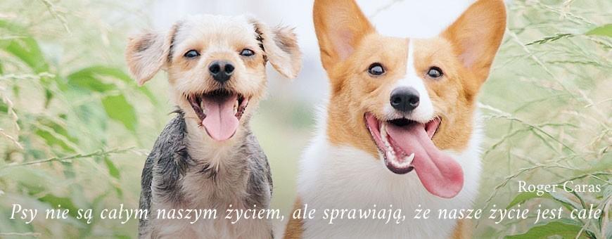 Dla psa | Sklep Najlepszy Przyjaciel