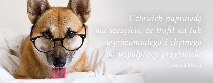 Karma dla psa | Sklep Najlepszy Przyjaciel