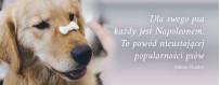 Smakołyki dla psa | Sklep Najlepszy Przyjaciel