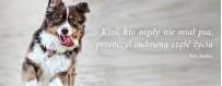 Witaminy dla psa | Sklep Najlepszy Przyjaciel