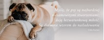 Środki na pasożyty dla psa | Sklep Najlepszy Przyjaciel