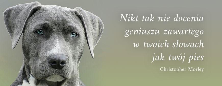 Pielęgnacja psów   Sklep Najlepszy Przyjaciel