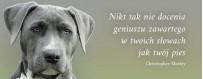 Pielęgnacja psów | Sklep Najlepszy Przyjaciel