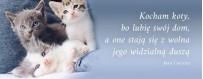 Karmy dla kota | Sklep Najlepszy Przyjaciel