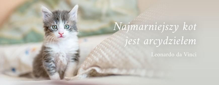 Mokra karma dla kota | Sklep Najlepszy Przyjaciel
