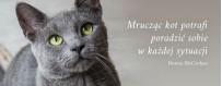 Smakołyki dla kota | Sklep Najlepszy Przyjaciel