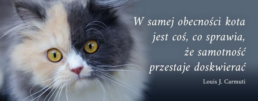 Pielęgnacja kota | Sklep Najlepszy Przyjaciel